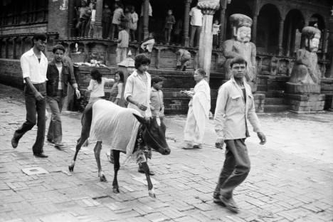 Gai Jatra A Celebration of Life Death and Renewal image