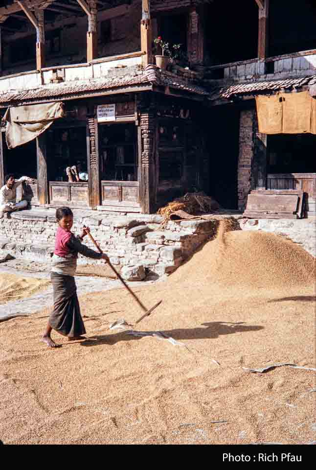 Girl drying grain in dattatrya square during 1974 image