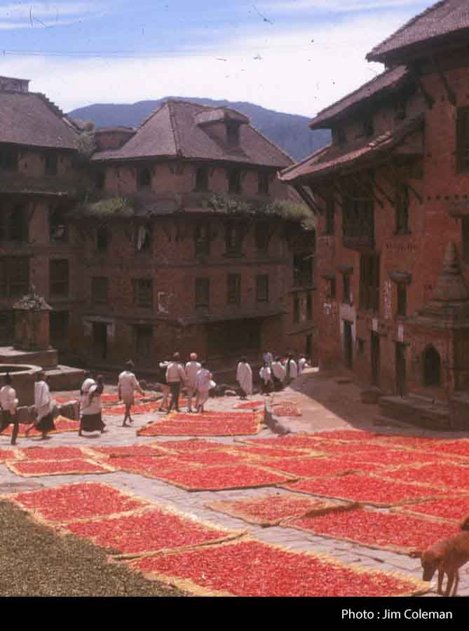 Red peppers spread out to dry on mats in a street image