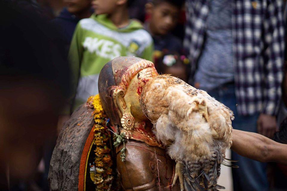 Sacrifing a hen to Betal Bhairav image
