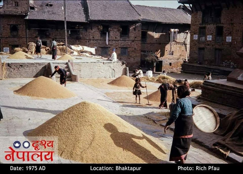 Women Harvesting Grains in Suryamadhi image