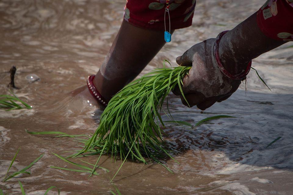 https://www.bhaktapur.com/wp-content/uploads/2020/06/Amit-Machamasi-2.jpg