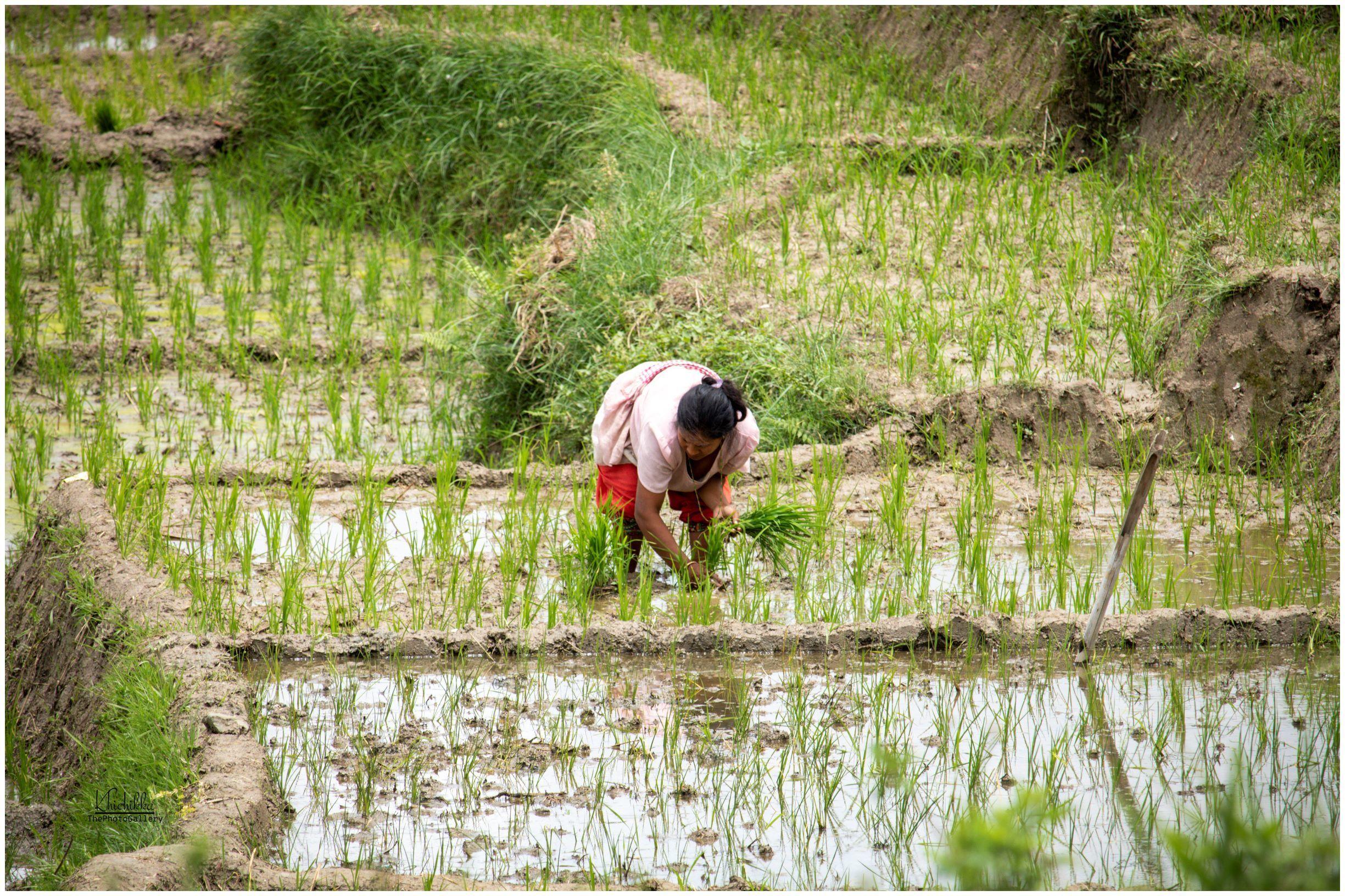 https://www.bhaktapur.com/wp-content/uploads/2020/06/Saurav-Bajracharya-resized-3.jpg